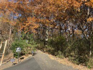 三日月村 駐車場からの道