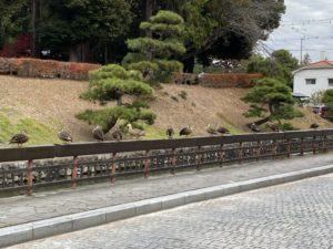 堀と土塁と鴨