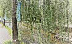 京都 白川