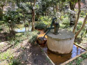 公園内の池と井戸