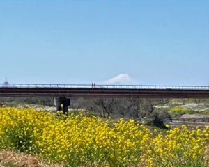 千葉県立関宿城博物館 富士山