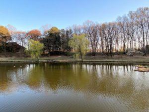 御所沼と公方様の森