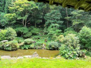 池泉回遊式庭園2