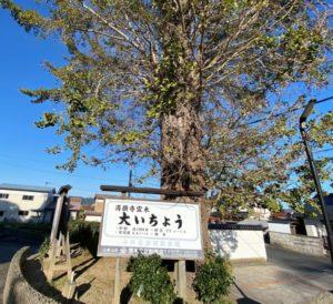 満願寺の大いちょう