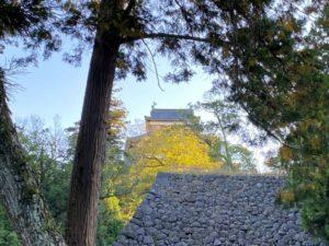 イチョウと松江城の天守