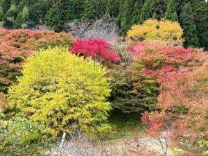 月山富田城 千畳平周辺の紅葉