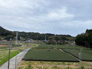 現在の勝間田 茶畑