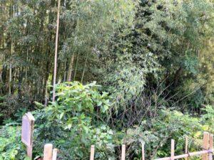 慶音寺境内 土塁 堀