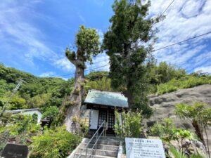 八重姫御堂と梛の木