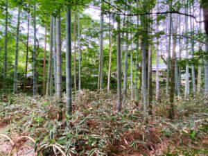 竹林 修善寺