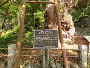 葛見神社の大クス