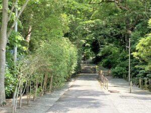 妙本寺 境内の道 階段