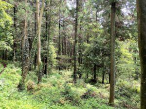 森林 小路