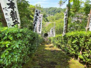 杉本寺 苔階段(上から)
