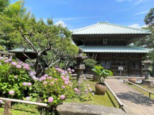 英勝寺 仏殿 紫陽花