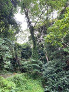 椎の木三本 現地周辺