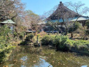 徳川家ゆかりの放生池 遊行寺