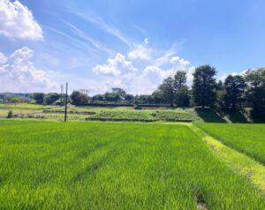 比企郡 泉福寺(遠景)